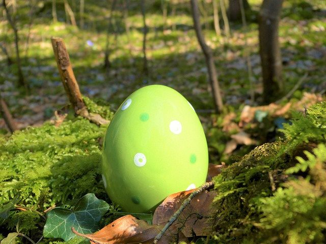 green egg on green moss