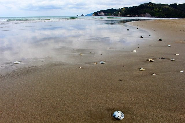 A New Zealand beach with shells scattered on it mirroring the sky.
