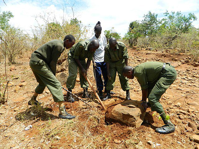 Community Wildlife Rangers engaged in access roads improvement, joining hands to uproot rocks on the road.